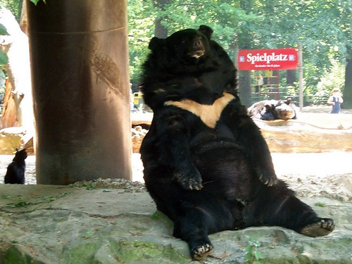 Bar Und Katze, Sie Sind Freunde.    Bear And Cat, They Are Friends.