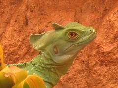 Lizard Exhibit at Museum