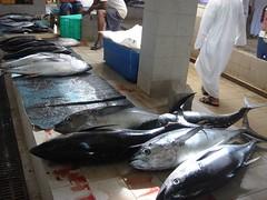 animal, tuna, fish, fish, bonito, milkfish,
