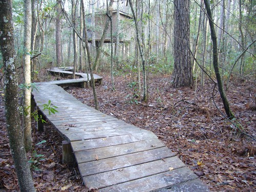 forest hostel treehouse boardwalk