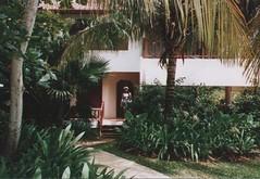 arecales, backyard, garden, property, eco hotel, house, estate, resort, real estate, villa,