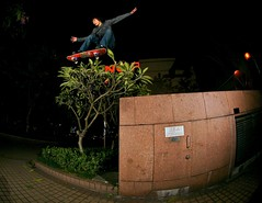 Lee Ka Lung - Tree Gap Ollie @ TsimShaTsui