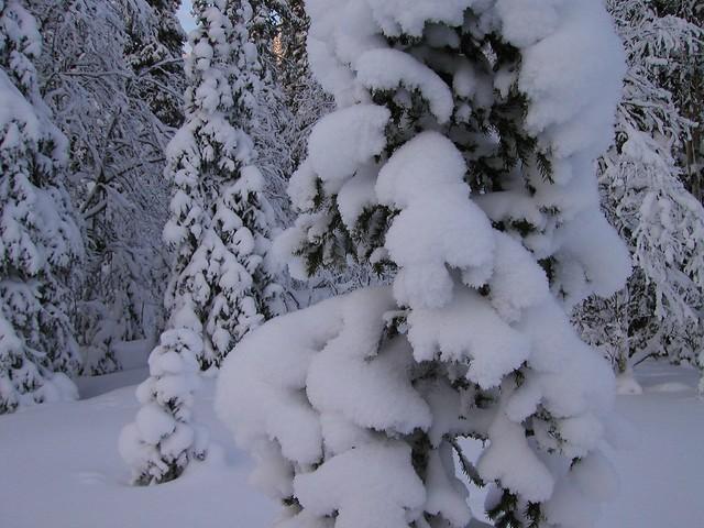 Detalle de los árboles.