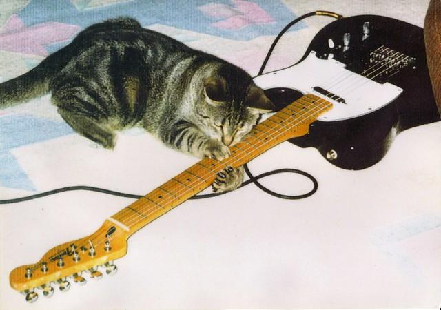 """""""Cat Scratch Fever!"""" - Ottawa 2002"""