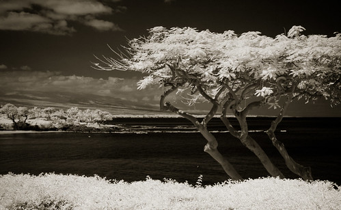 trees vacation blackandwhite bw usa landscape ir hawaii infrared portfolio maunakea ir10d