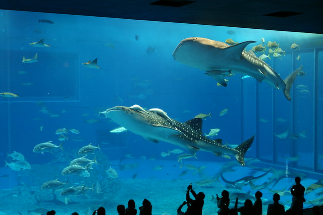 Image Result For Austin Aquarium