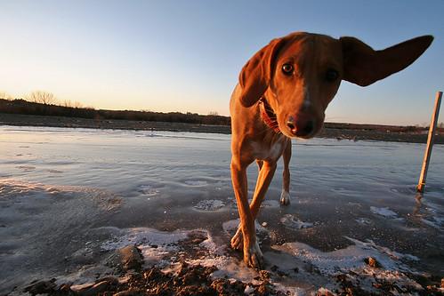 sunset dog ice ear ryder mooreprint