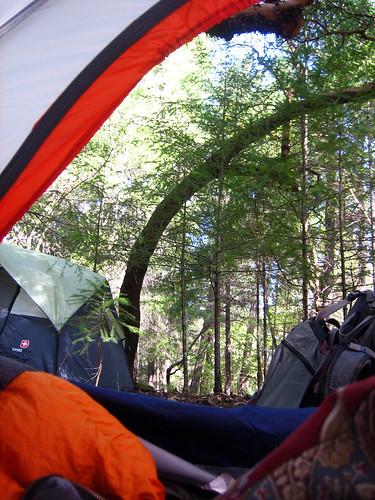 ca trees tent annwfn