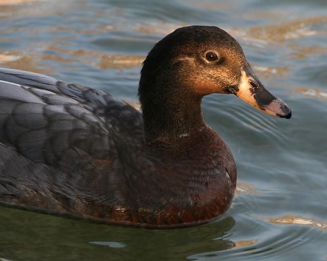 Duck....?type? 01-24-07