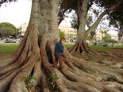 Dan on big tree