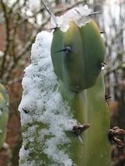 THE SNOW OF 2007-TUCSON ARIZONA, USA