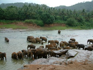 Pinawalla Elephant Orphanage