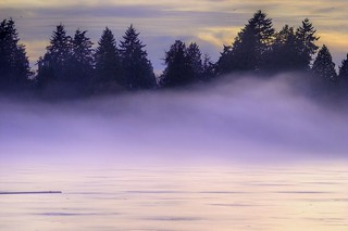 lost in the fog lagoon