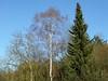 Bäume vor blauem Himmel