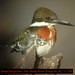 Green Kingfisher - Photo (c) Jerry Oldenettel, some rights reserved (CC BY-NC-SA)