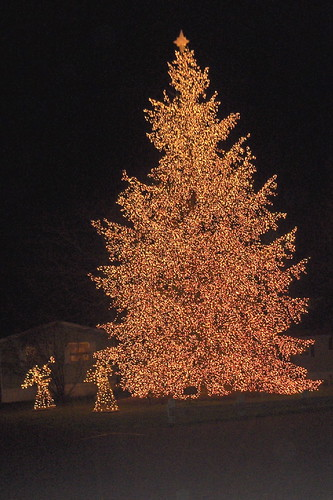 Lighted christmas tree in yard of a manufactured home