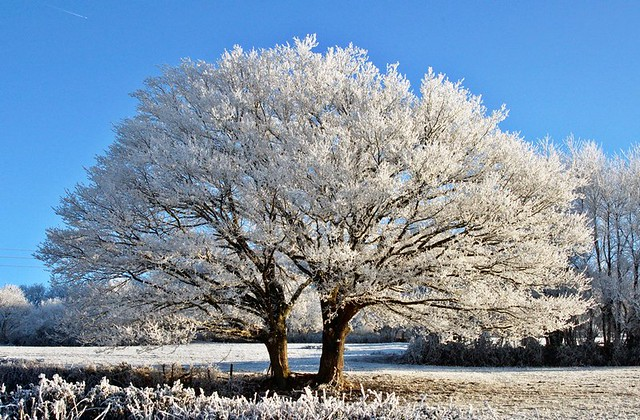 The love makes beautiful. frosted landscape for christmas xmas and happy new year pour noël et le nouvel an