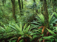 rainforest, tree, plant, old-growth forest, forest, natural environment, ostrich fern, ferns and horsetails, jungle, biome, vegetation, temperate broadleaf and mixed forest,