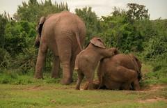 Chitwan Hatisar Elephant Breeding Center