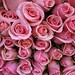 Just Roses, or Welcome to Spring season by Tiquis!【ツ】