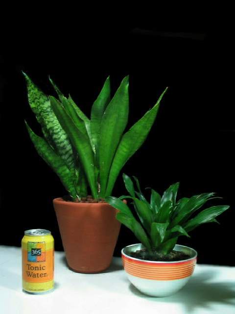 Easy care flowerless indoor plants flickr photo sharing for Easy to take care of indoor plants