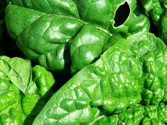 1k-7649 spinach