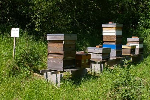 Morgelle hives 2