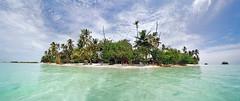 arecales, lagoon, tropics, beach, tree, sea, ocean, island, cay, vacation, shore, caribbean, coast, islet,