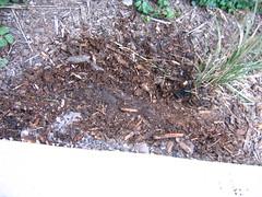 soil, mulch,