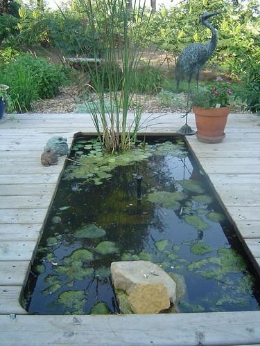 Zen pond flickr photo sharing for Koi pond zen