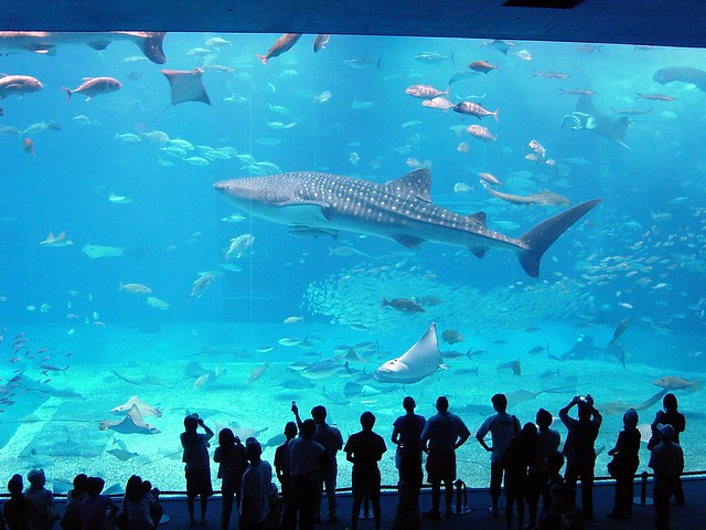 10 Largest Aquariums In The World Touropia Travel Experts