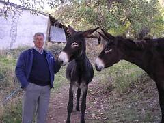 mare(0.0), okapi(0.0), halter(0.0), horse(0.0), mustang horse(0.0), animal(1.0), donkey(1.0), mule(1.0), pack animal(1.0),