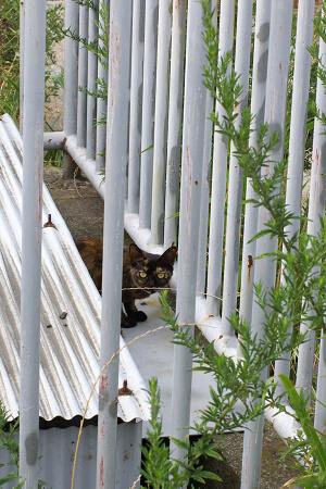 橋の横の猫