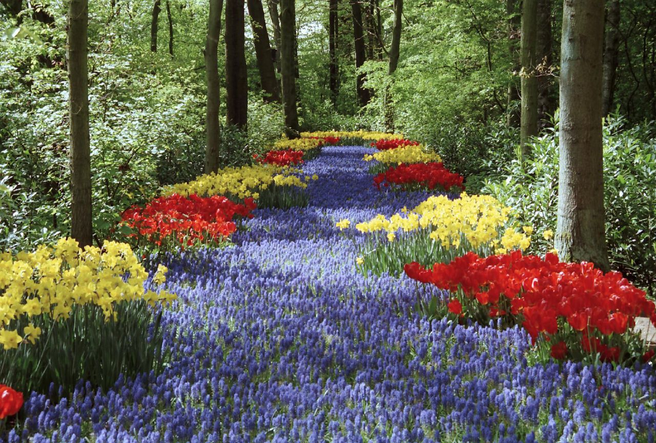 キューケンホフ公園に咲く花々の道