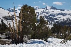 Island Pass Snow