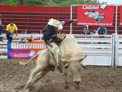 western riding(0.0), equestrian sport(0.0), charreada(0.0), barrel racing(0.0), animal sports(1.0), rodeo(1.0), cattle-like mammal(1.0), event(1.0), sports(1.0), bull riding(1.0),