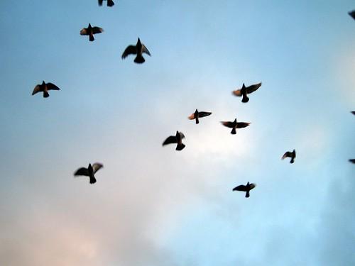 Stamford Birds