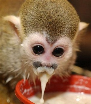 Spider Monkey   Flickr - Photo Sharing!