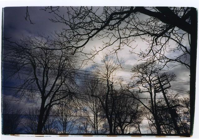 toronto wintertrees01