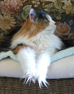 ~Cookiecat Fuzzy Toes~