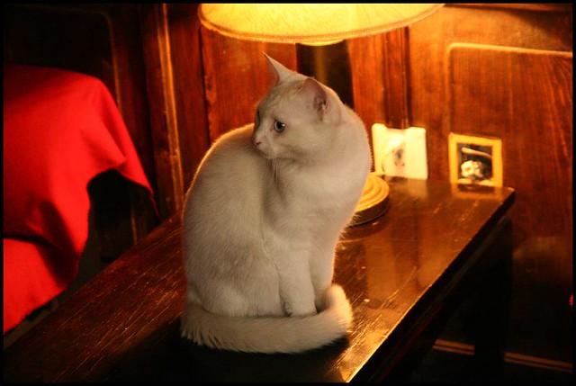 Cute cat at Beijing.