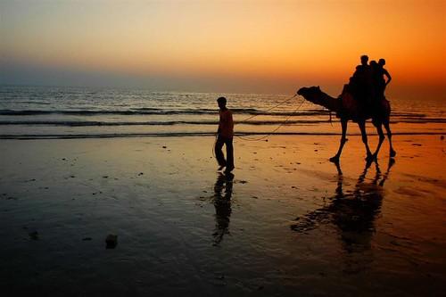 boy sunset india beach topf25 silhouette golden bravo photographer camel seashore bigsmile gujarat eyecatcher riders supershot fivestarsgallery abigfave platinumphoto anawesomeshot superbmasterpiece goldenphotographer beyondexcllence bestbbravo