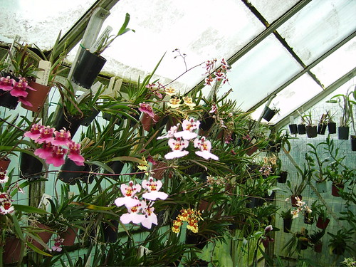 Creating A Wall Of Orchids And Other Plants