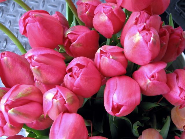 Pink Tulips, Canon POWERSHOT SD40