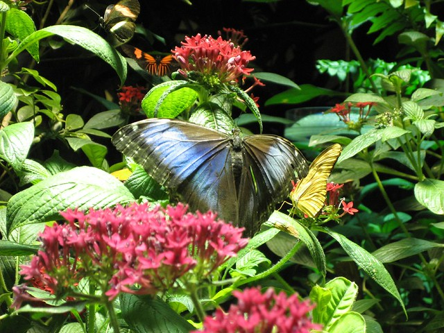 Butterfly Garden Natural History Museum Nyc