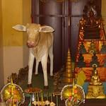Shrine and Cow - Phnom Penh, Cambodia