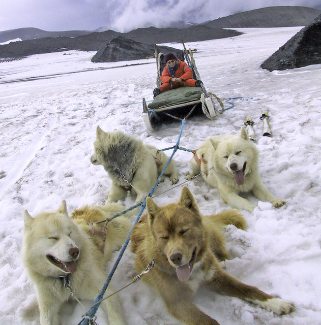 Dogsledding on an Iceland, Canon POWERSHOT S20