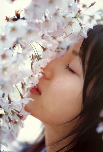桜にキスしている平田薫