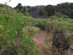 Camino Real de la Costa-Isla de la Palma 33