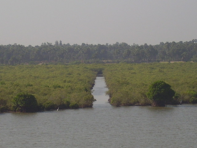 Pichavaram - from atop II
